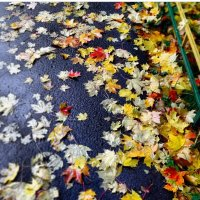 Ранняя осень :: Эрика Петросян