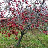 очень поздний фрукт :: Леонид Виноградов