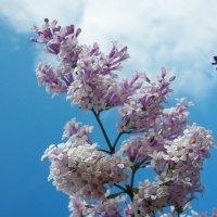 Цветы радости :: юрий Амосов