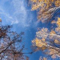 Осеннее небо :: Виталий Ахмедьянов