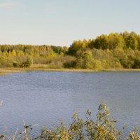 Осень. :: Наталья Метелькова