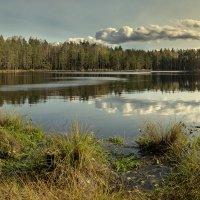 Лесное озеро. :: Dmitry D