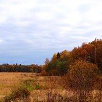 Разноцветная осень, лес... :: Антонина Гугаева