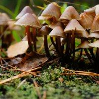 грибочки :: Элла Чуксина