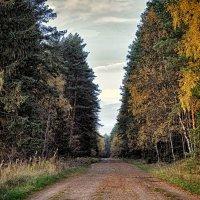 лесная дорога :: Любовь Анищенко