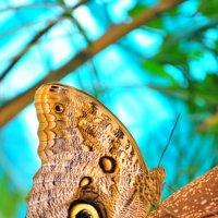 Бабочка :: Катя Петрова