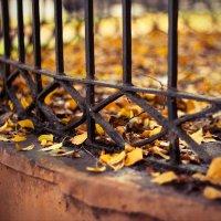 Как плакала осень в попытках за жизнь удержаться... :: Татьяна Копосова