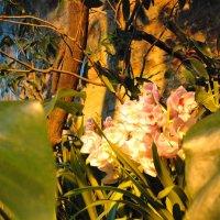 Любимые цветы :: Катя Петрова