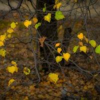 осень :: Соня Орешковая (Евгения Муравская)
