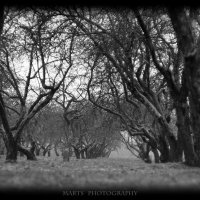 яблоневый сад :: Artem Demenko
