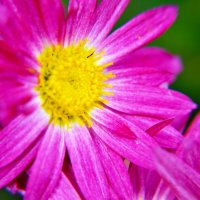 фиолетовое солнце. :: Elenn S