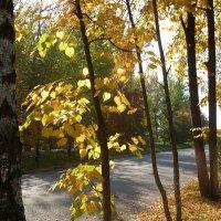 Осень... :: НАДЕЖДА КЛАДЧИХИНА