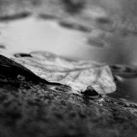 Черно-белая осень :: Елена Васильева