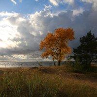 Финский залив :: Елена Фролова