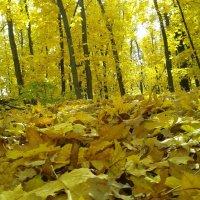 Осень :: Александр Швец