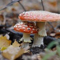 в лесу :: Римма Покачалова