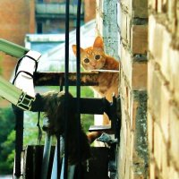 Соседский котЭ :: Julia B