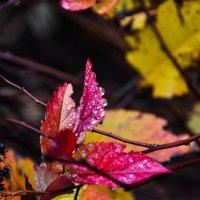 Краски осени :: Светлана