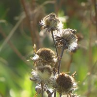 Полевые цветы :: Дарина Малышева