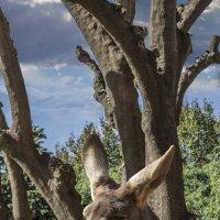 kangol :: noanoa delmar