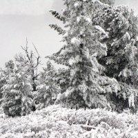В горах на перевалах :: Ольга Иргит