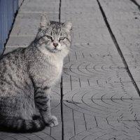 брутальный кот :: Славка Зозуля