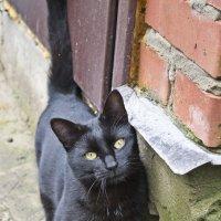 Кошка :: Павел Григорьев