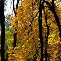 Осень золотая :: Наталья Коломийчук
