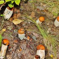 грибное семейство :: NATOCHKA MIRONOVA