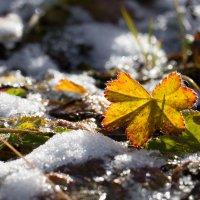 Первый снег в Воркуте (месяц назад) :: Денис Антонов