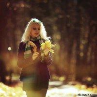 На ковре из желтых листьев :: Белка _