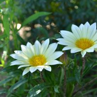 Цветы :: Svet_Lana ZGS