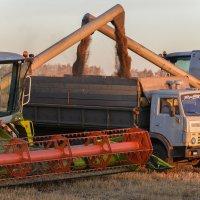 уборка пшеницы :: Maxxx©