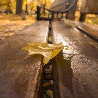 Осень.... :: Алексей Сильников