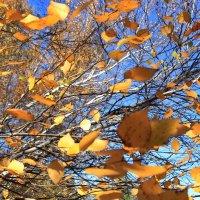 Вот и осень.... :: Ирина
