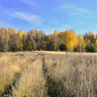 осень в Кондюрино :: Андрей Смирнов