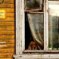 Дом образцового содержания :: Татьяна Копосова