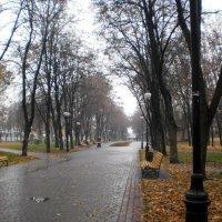 Бульвар под дождём :: Наталья Тимошенко