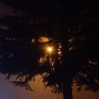Туман...вечер...свет :: Александр Коварский