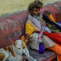 Пёс который очень любит чапати :: Марина Семенкова
