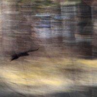 одинокая птица :: Лена Булгакова