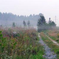 утро,туман :: Олег Петрушов