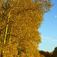 Осень :: Юрий Клишин