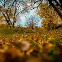 Осенние краски :: Татьяна Басараб