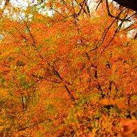 Осенние листва :: Татьяна Басараб