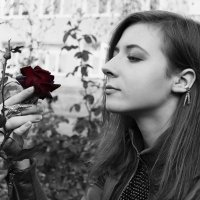 red rose in the dark hands :: Marina Led