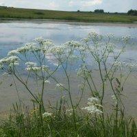 Река Вожа :: Виктория Булат