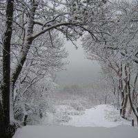 Чёрное море зимой. :: Александр Волков