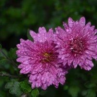 Последние цветы осени :: Татьяна -