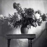 Натюрморт мокрая  черно-белая печать. :: Харис Шахмаметьев